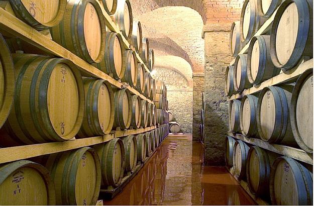 Barrique cellar at Cast. di Bolgheri