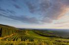 Les vignobles du Castello Brolio s'étendent à perte de vue.