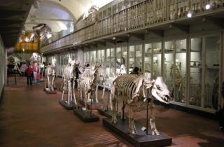 Oú vont-ils?  ©Sailko, via Wikimedia Commons