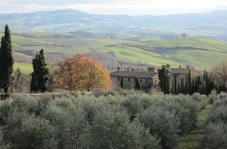 In Chiarentana findet vom 5. Bis 12. November die Olivenöl-Woche statt. .
