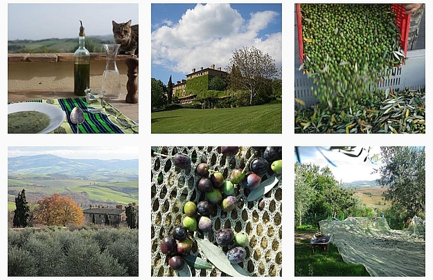 How about taking part in an olive harvest in Tuscany?